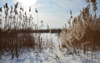 Немного зимы